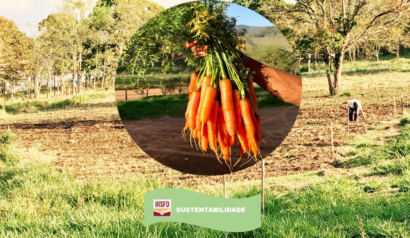 """""""Local Food"""": uma tendência além da sustentabilidade"""
