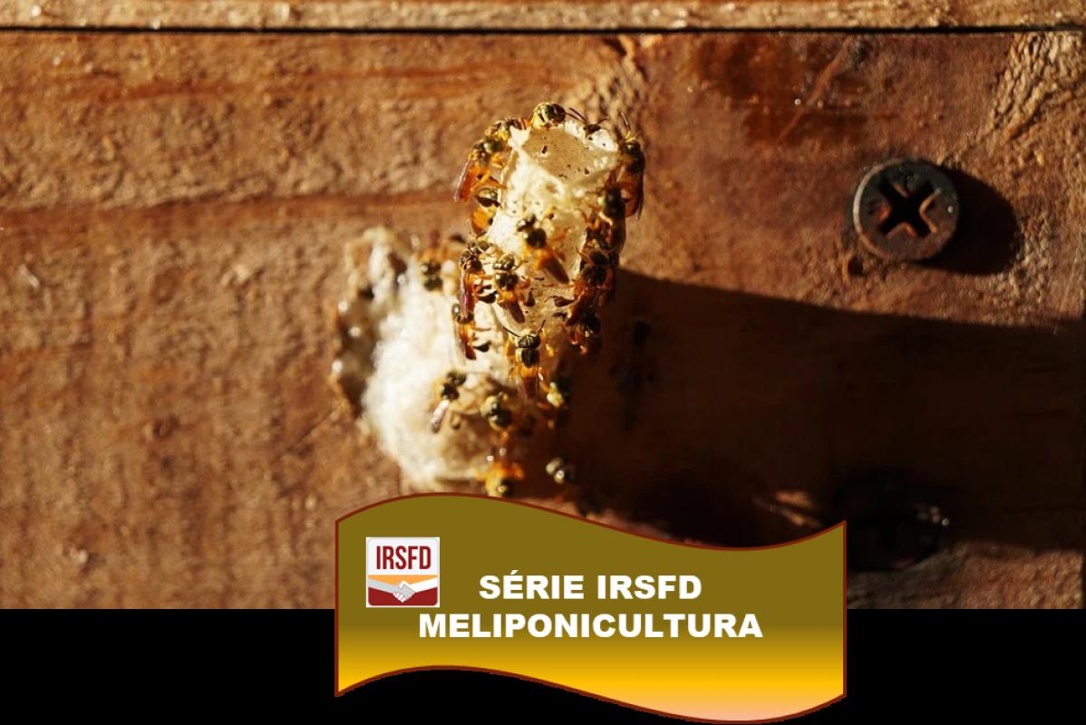 SÉRIE IRSFD – MELIPONICULTURA - Conheça a meliponicultura
