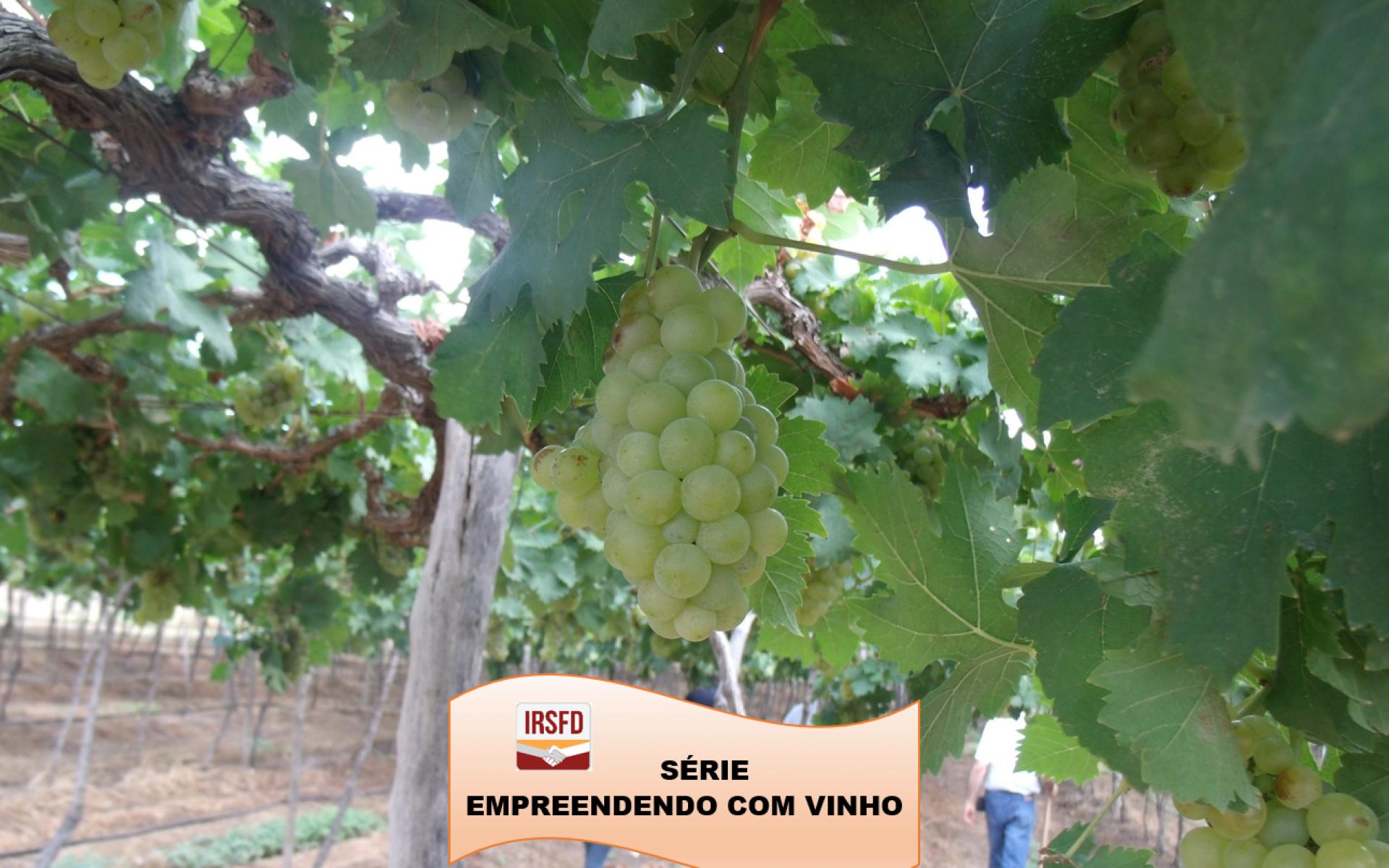 Série IRSFD – Empreendendo com vinho P.02