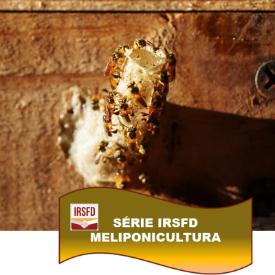 SÉRIE IRSFD – MELIPONICULTURA – Conheça a meliponicultura